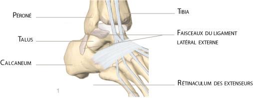 cheville ligamentoplastie